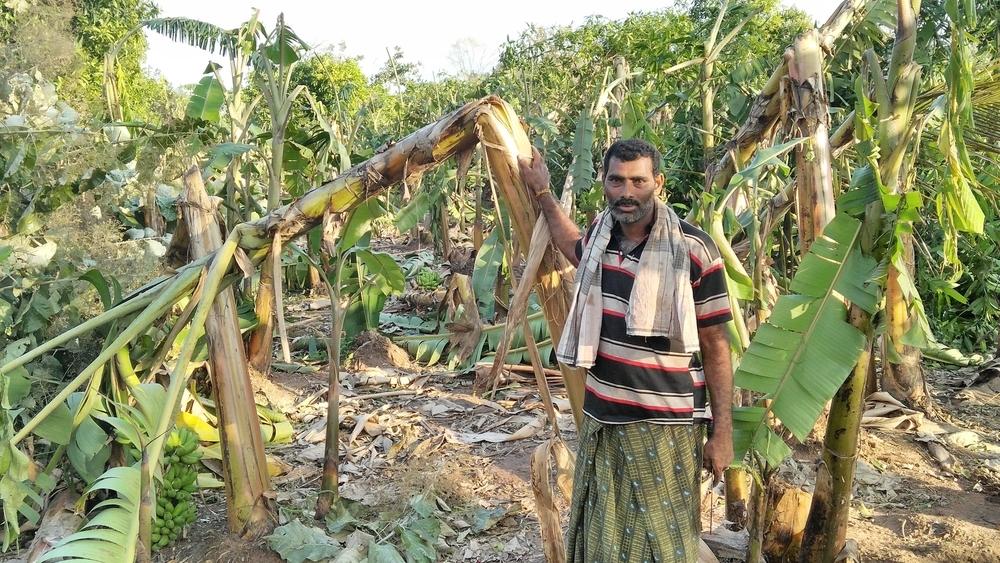 Cyclone Vardah flattens crops in Tamil Nadu – and the hopes