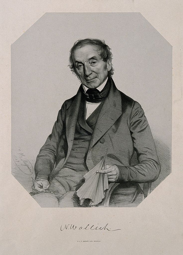 Nathaniel Wallich. Lithograph by TH Maguire, 1849. Credit: Welcome Library, London/Wikimedia Commons CC-BY-2.0