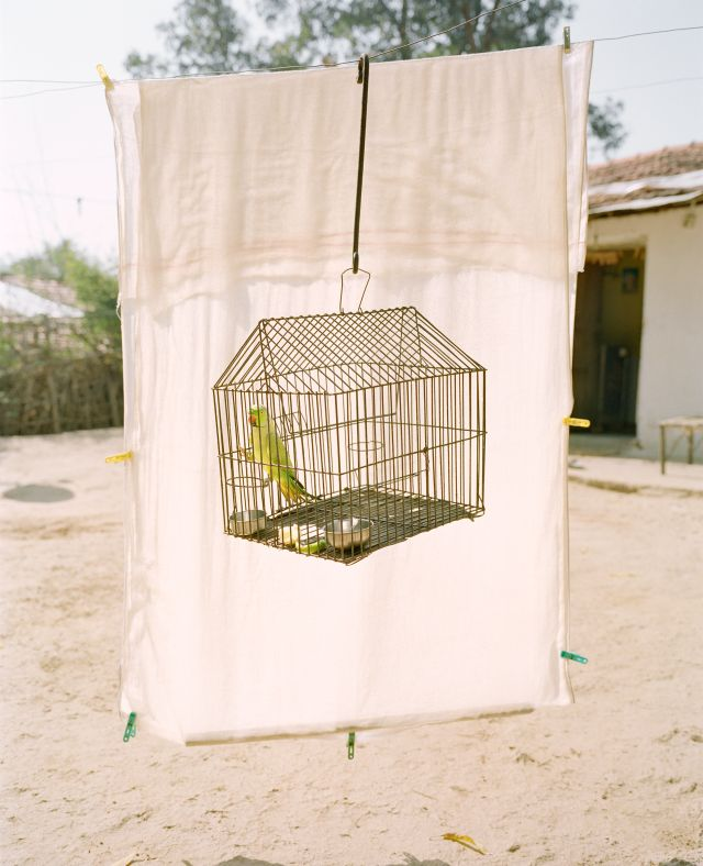 Lovebird, Ramtek, Maharashtra, India, 2015, from the series A Myth of Two Souls (2013-). Photo credit: © Vasantha Yogananthan