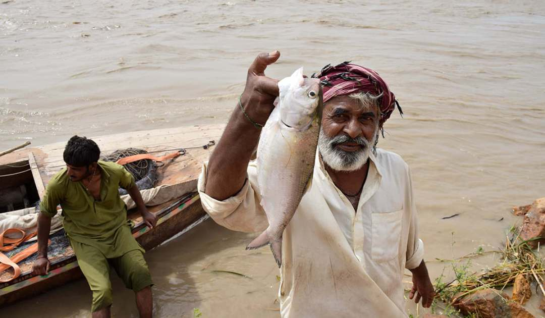 Mohana fishermen catching Hilsa/Palla downstream in the Indus. Source: Dawn