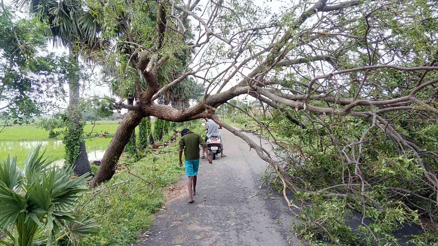 A tree fallen on a street in Nagapattinam district after the cyclone (Photo credit: Revathi)