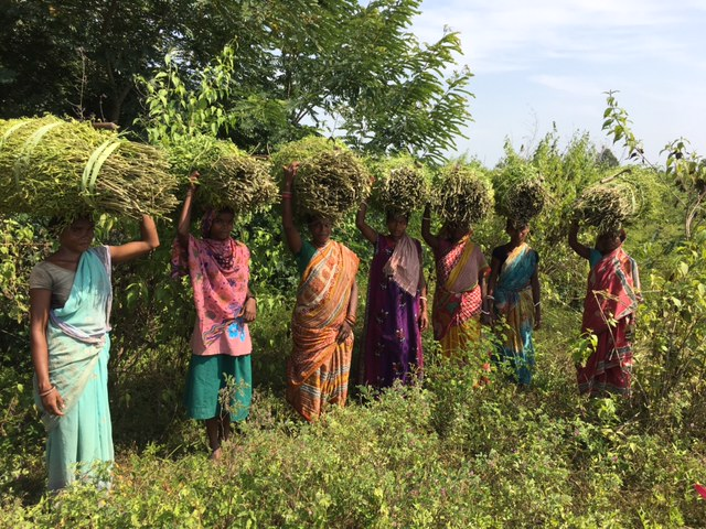 Villagers in Malkangiri returning to their homes from the fields. Photo: Priyanka Vora