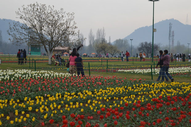 The 33-hectare Tulip Garden in Srinagar is the new addition to Kashmir's tourism spots since 2008. However, in recent months, after the national media have been swamped with stories of violence in the Valley, tourist arrivals declined. Photo credit: Athar Parvaiz/IndiaSpend.com