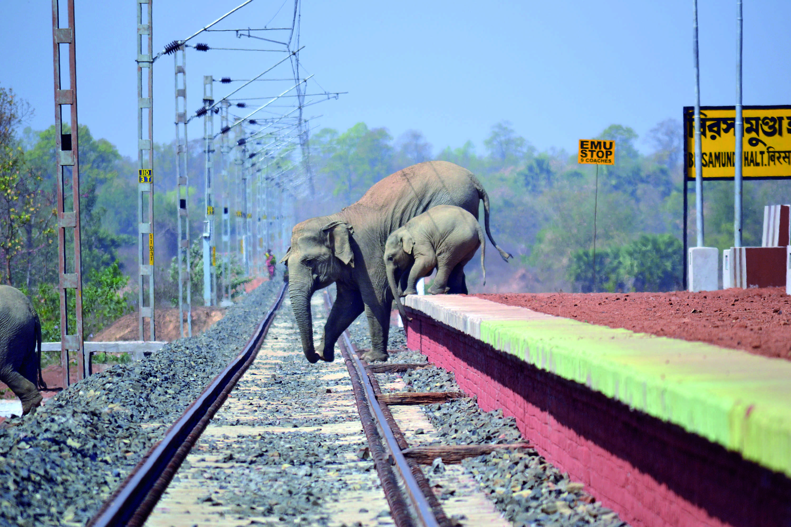 """Two elephants try to negotiate a railway crossing in 'Impossible Odds' by Biplab Hazra. """"Here in the Bankura district, beleaguered herds desperately navigate a landscape that would be unrecognisable to their foremothers,"""" says the press note. """"The railway authorities didn't consider their ancient pathways when they laid this track, and every year a memory's worth of elephants is wiped out by speeding trains...Hazra's frame is a desolate plea to make amends, a caustic statement on the ecological cost of development, an embarrassing rumination on our definition of progress."""""""