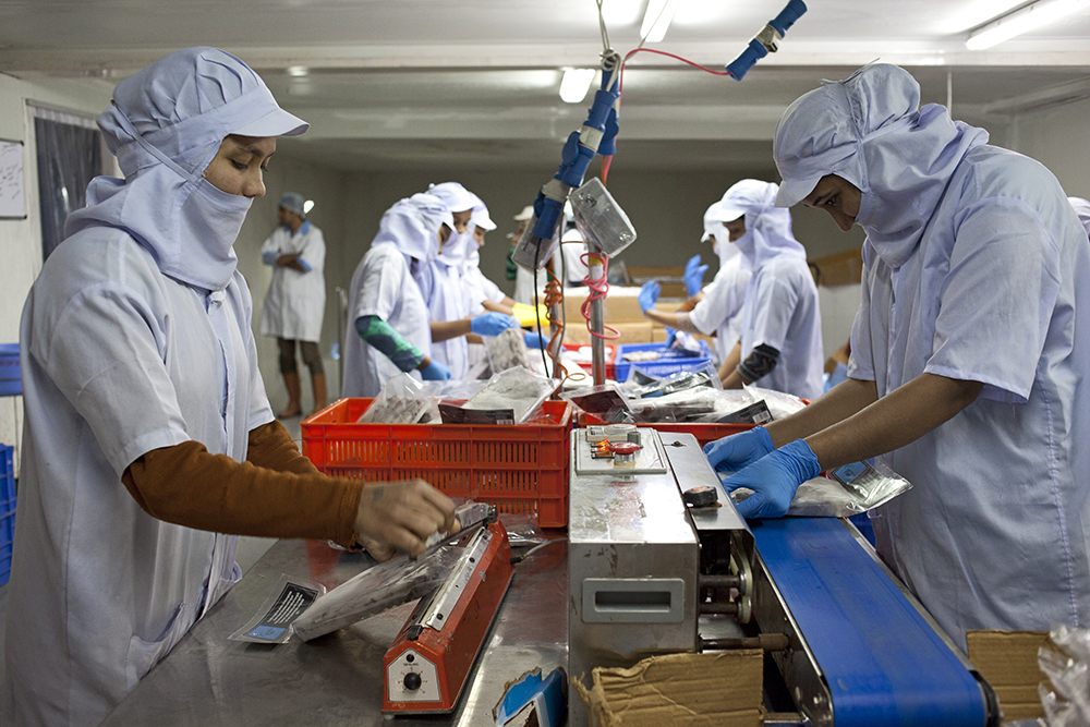 Inside the fish processing units, the workers are almost all women. Photo Credit: Nikhil Roshan