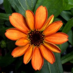 There is now a flower growing in space