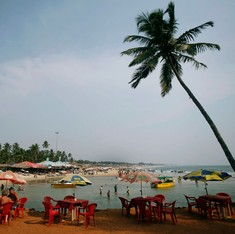 It's not just the coconut trees – Goa is undermining many other green laws