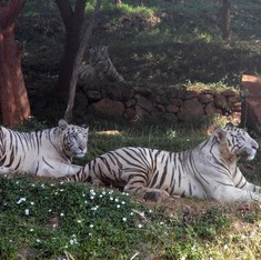 World Bank to partly fund redevelopment of Indian zoo devastated by cyclone