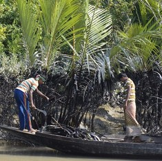 Alarm in Bangladesh after yet another coal ship catastrophe in the Sundarbans