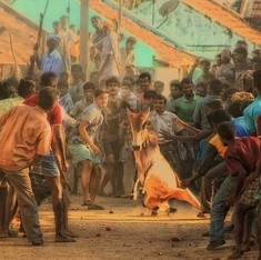 To ban or not: How jallikattu reveals the hypocrisy of both sides and the problem with online debate