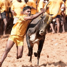 Supreme Court to hear petitions challenging Centre's Jallikattu order