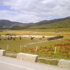 The monsoon-predicting plants of Tibet