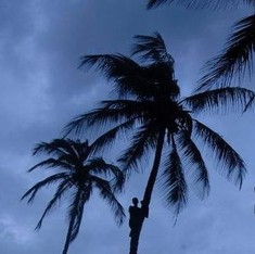 Mumbai woman's death after coconut tree falls on her triggers allegations against civic body