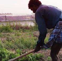 'विश्व सांस्कृतिक समारोह' की सबसे बड़ी कीमत यमुना खादर के किसान चुका रहे हैं