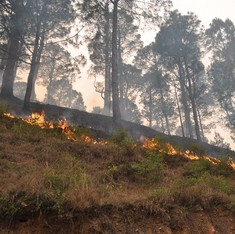 Uttarakhand forest fires: Flames brought down by more than 70%, says NDRF chief