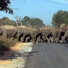 Centre plans to build subways for animals on new roads that cut through forests, sanctuaries: The Telegraph