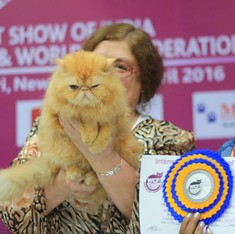 Furballs and snobbery: The odd and delightful world of an Indian cat show