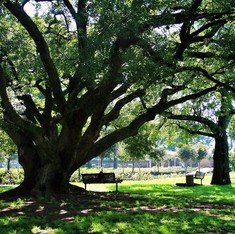 Why more cities need to add up the economic value of trees