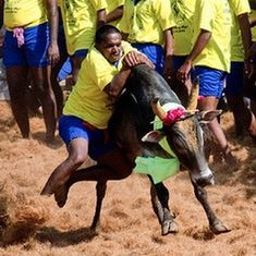 Pass ordinance to allow jallikattu this Pongal: Tamil Nadu chief minister requests Narendra Modi