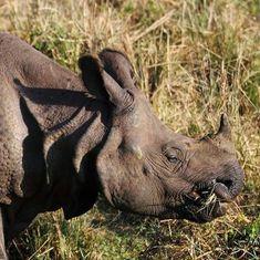 India is preparing to fight rhino poaching, CSI-style
