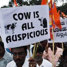 An Indic dilemma: Should you be drinking cow urine?