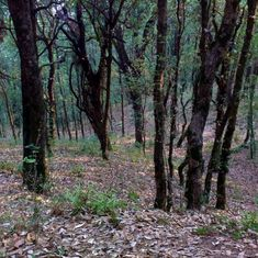 Should individual citizens own India's land, water, pastures and forests?