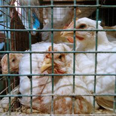 Centre confirms outbreak of bird flu in eastern Bengaluru, says situation under control