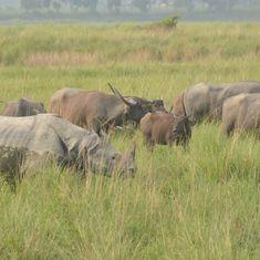 Centre threatens to blacklist BBC correspondent for film on anti-poaching policy in Kaziranga