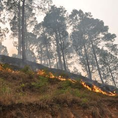 Damage control: Why Uttarakhand saw few wildfires this year