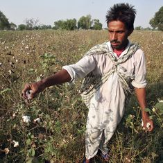 Counterview: Fact-checking Vandana Shiva's latest criticism of Monsanto and Bt cotton