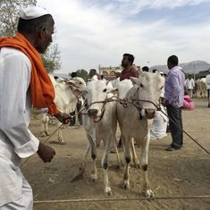 Opinion: Centre has not banned cow slaughter but has introduced a new licence raj around it