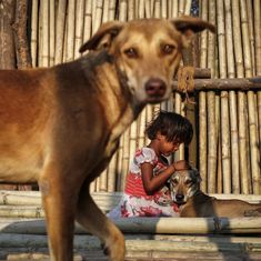 Barking up the wrong tree: The agency in charge of controlling street dogs is completely ineffective