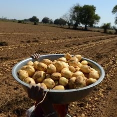 Uttar Pradesh Police arrest two for dumping potatoes outside Assembly, say they were not farmers