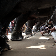 Documentary 'Gods in Shackles' on temple elephants is an eye-opener