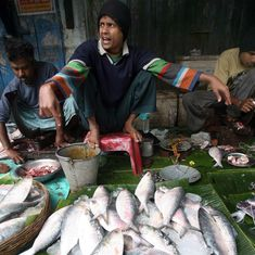 India-Bangladesh relations are so good that Dhaka might even lift its hilsa export ban