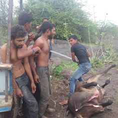 Lesson from Gujarat: Cow protection vigilante groups need to be banned