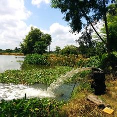 Kolkata's unique wetlands that treat sewage water are shrinking