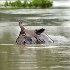 Hundreds of animals continue to drown in Kaziranga as park remains under water