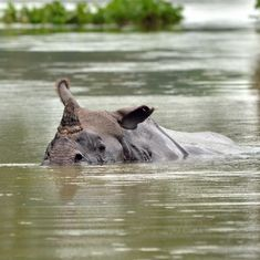 Kaziranga's rhino protectors are challenging traditional views of how conservation works