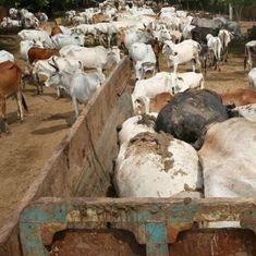 गायों के पेट में पॉलीथीन, पत्थर, कीलें, सिक्के, ब्लेड और सेफ्टी पिन
