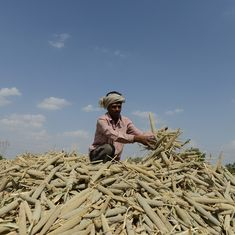 Farm incomes in India did not rise despite the growth in agriculture sector amid lockdown