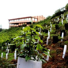 A group of conservationists are trying to replant native trees in the Western Ghats