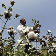 Sustainable producers are bringing respect back to the cotton value chain, from crop to garment
