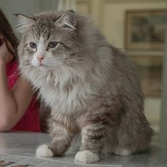 Film review: Cat drama 'Nine Lives' is a shaggy dog tale