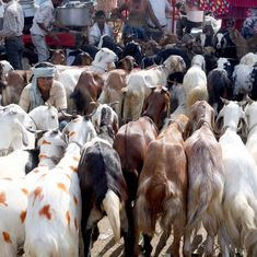 Uttarakhand: High Court bans animal slaughter in the open across the state on Bakrid