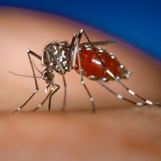 Delhi: Five more die from complications caused by chikungunya, toll rises to 10