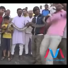 Video: Don't like people clicking selfies with you? Nor do snakes in Mount Abu