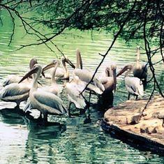 Delhi zoo shuts down after eight birds die of suspected avian influenza
