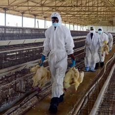 Gwalior zoo shuts down after several birds die of suspected avian flu