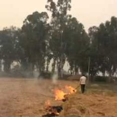Why farmers burn their fields in Punjab despite knowing that it worsens the fog over north India